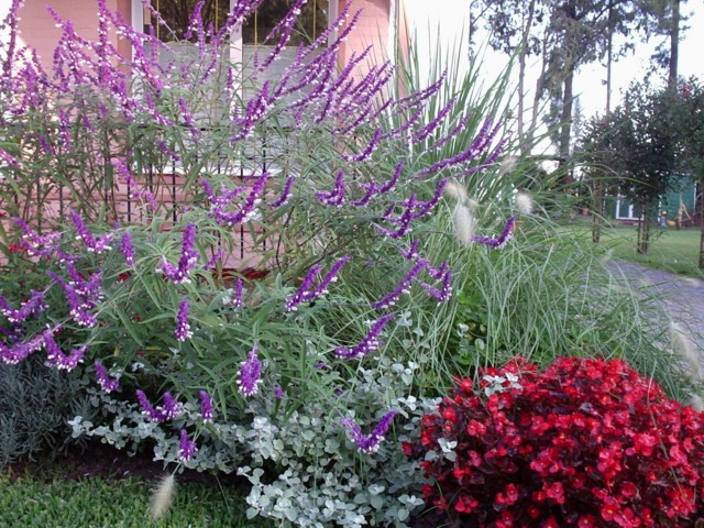 Como armar un jard n con herb ceas perennes por patricia for Adornos para parques y jardines