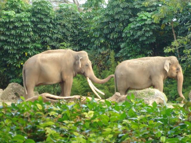Visitando el Zoo de Miami